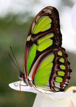 Mateřská škola má motýla