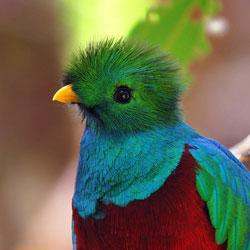 Mateřskou školku zdraví papoušek