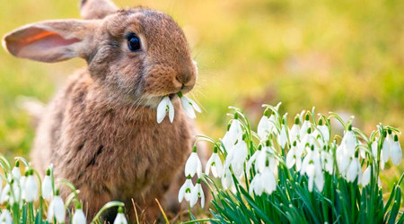 Výsledek obrázku pro jaro